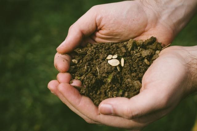 株式会社ジャストライト波岡 智がお送りする日本農業新聞による記事「園芸欄・種のプレゼントコーナー」についてのイメージ画像