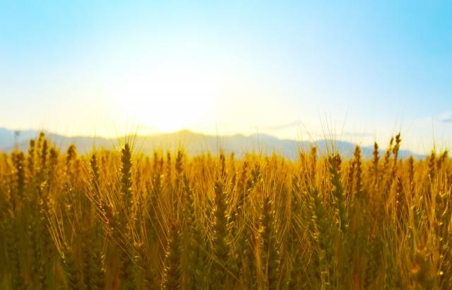 株式会社ジャストライト浪岡 智がお送りすることわざ「農は人真似」についてのイメージ画像