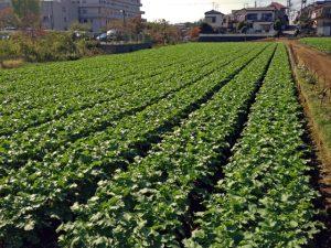 株式会社ジャストライト浪岡 智がお送りする日本農業新聞の「ダイコン」の記事についてのイメージ画像