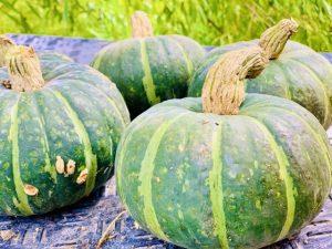 株式会社ジャストライト浪岡 智がお送りする日本農業新聞の記事に関する「カボチャ」についてのイメージ画像